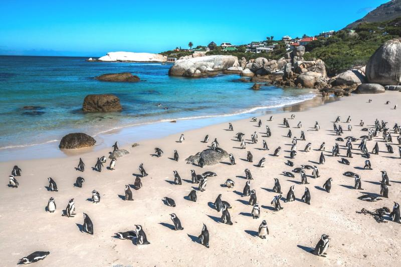 Тур ЮАР Кейптаун, Столовая гора, Мыс Доброй Надежды