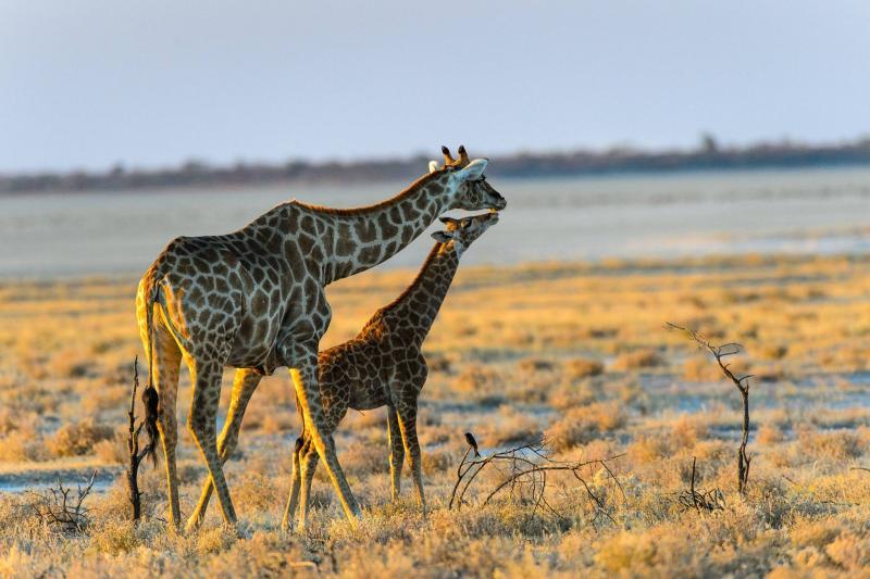 Тур за рулем по Намибии до Водопада Виктория