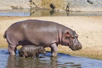 Животные в заповеднике Чобе, тур из Намибии