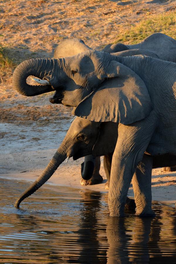 тур: круиз по реке Замбези, Водопад Виктория и сафари в Чобе