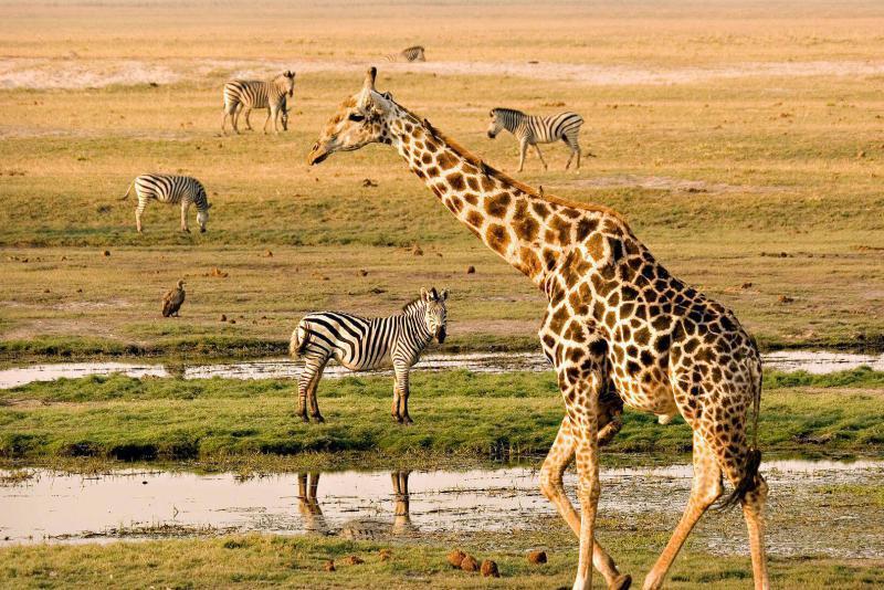 Национальный парк Чобе, Ботсвана, Африка