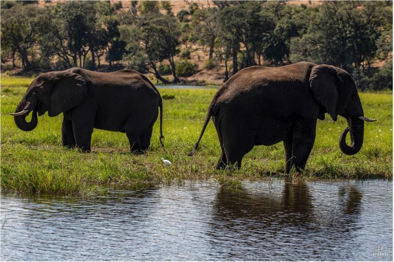Круиз по реке Замбези, Замбия, Водопад Виктория, сафари в Чобе, Ботсвана