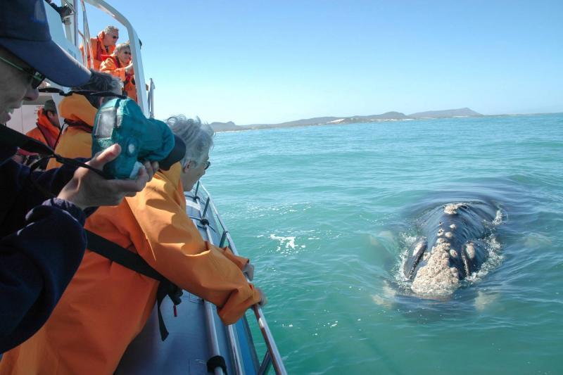 Приключенческий тур в ЮАР, Кейптаун, Херманус, киты