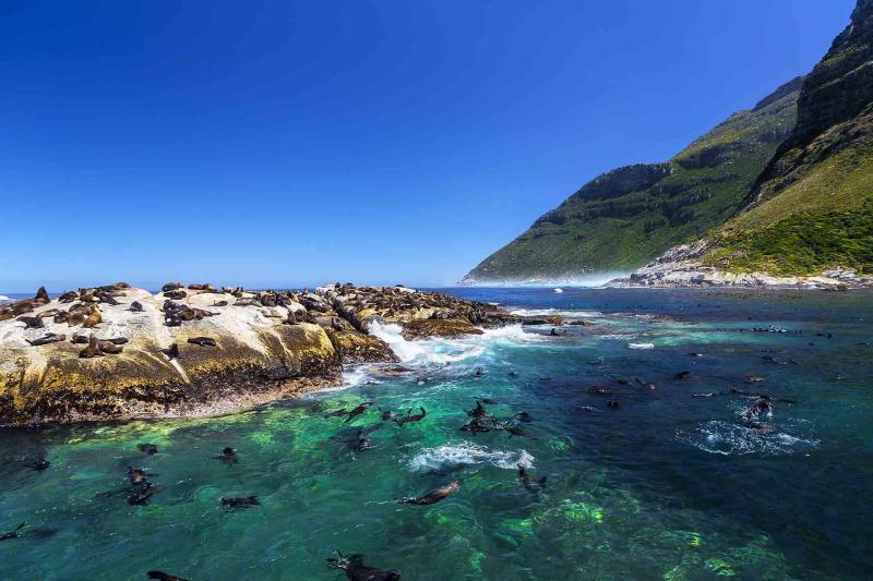 Приключенческий тур в ЮАР, Кейптаун, остров морских котиков
