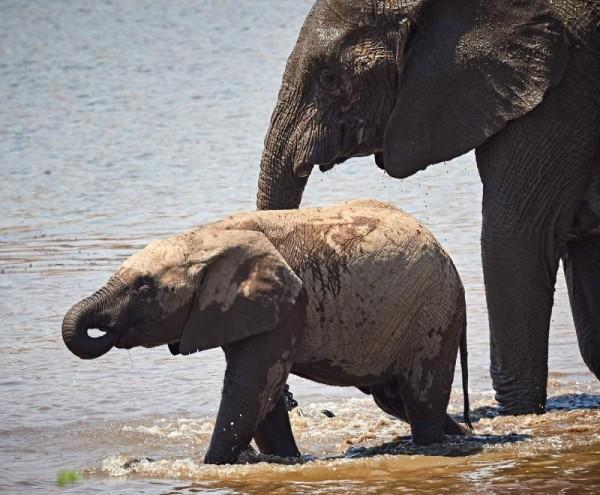 Пиланесберг национальный парк Южная Африка