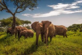 Тарангире национальный парк Танзания
