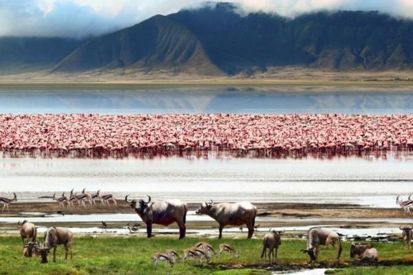 Озеро Маньяра в Танзании, национальный парк