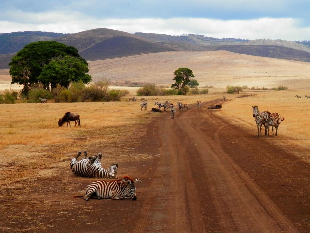 фото с сафари в танзании обдумывание идеи, поиск