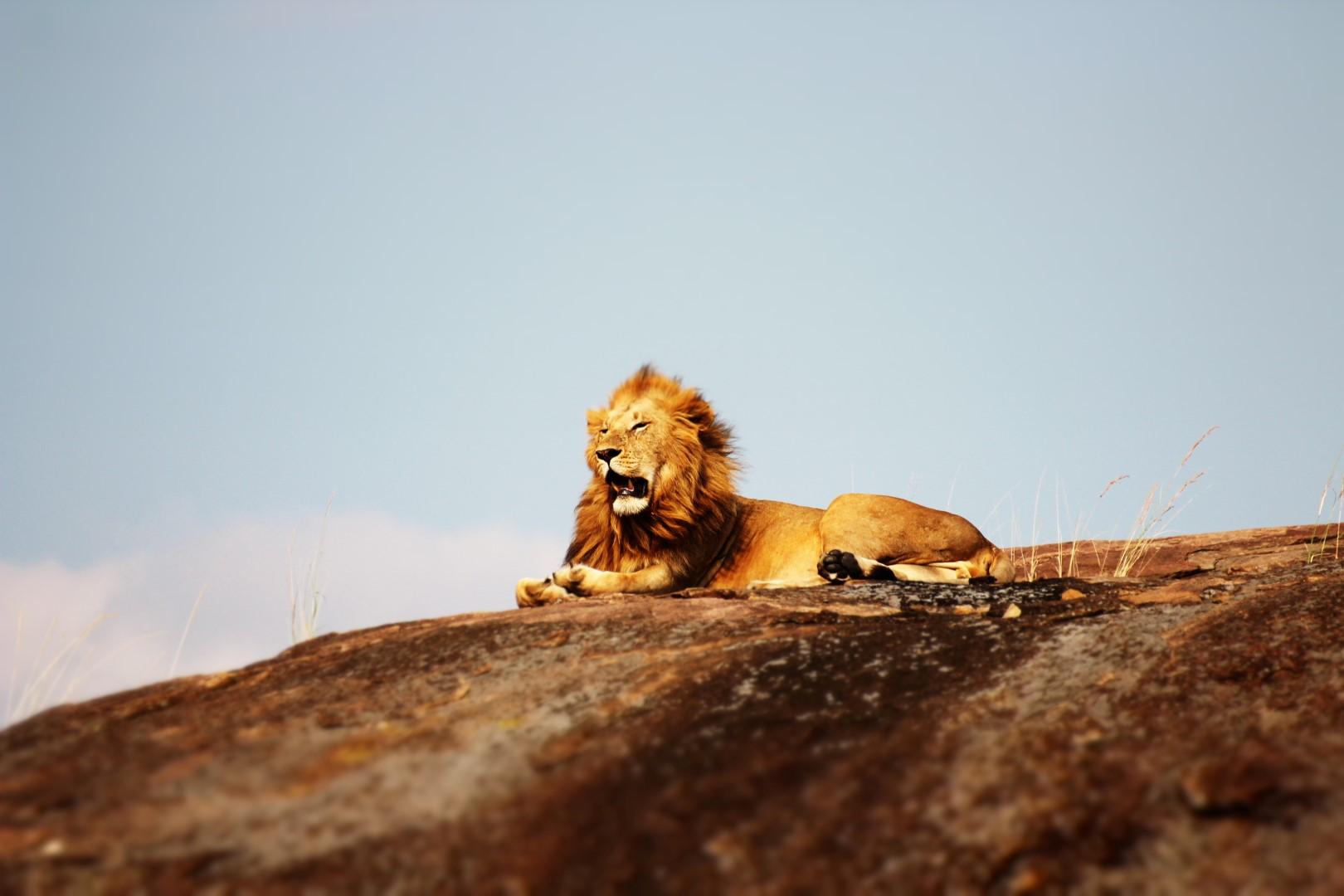 Тур-сафари-Танзания-Африка