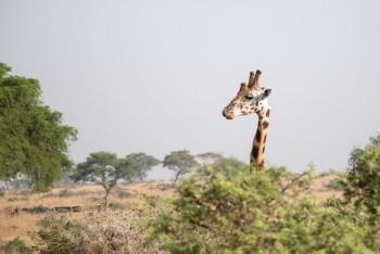 Уганда, тур к гориллам, иринаафрика