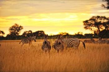 тур класса люкс Зимбабве