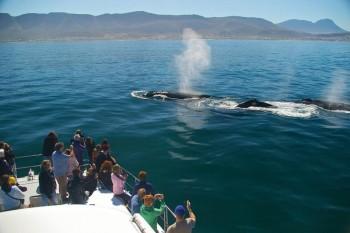 Южная Африка Тур в Кейптаун, киты в Херманусе