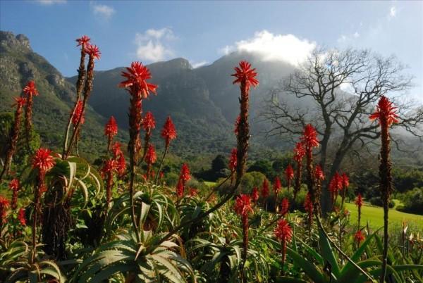 ЮАР тур Кейптаун Мыс Доброй Надежды, Столовая гора