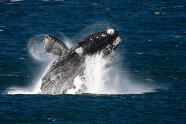 Экскурсия-тур: Южная Африка, Кейптаун, киты в Херманусе
